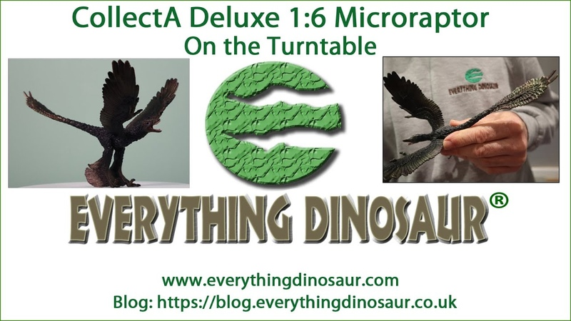 CollectA Deluxe 1 6 Scale Microraptor Dinosaur Model Turntable Tuesday