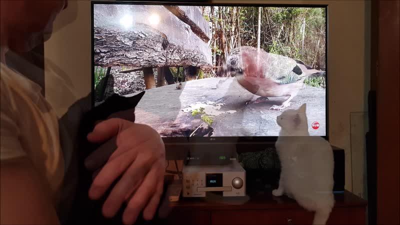 Кошки и кино про птичек и рыбок переростков