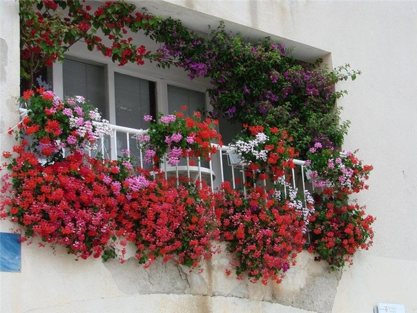 Цветы для тенистого балкона