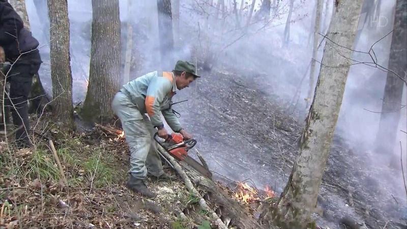 Площадь лесных пожаров наКубани засутки сократилась вдвое. Новости. Первый канал