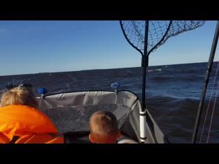 Кусочек нашей рыбалки  #эмоции #летняярабалка #рыбалка2020