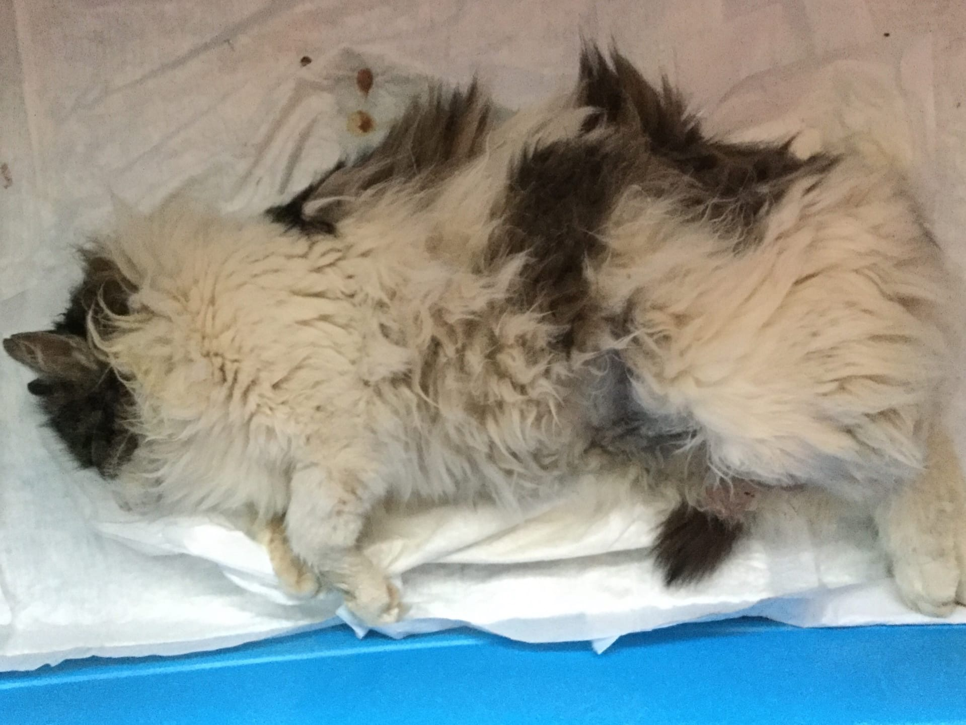 Почему Кастрированный Кот Похудел. Почему кошка худеет без видимых причин