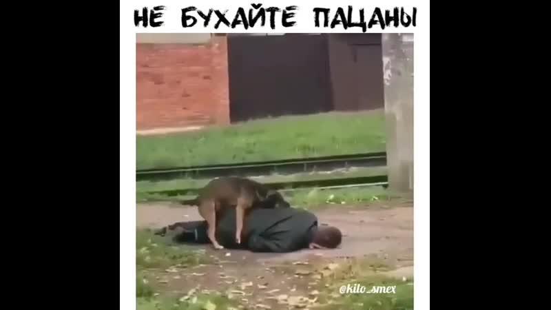 Пёс насилует пьяного ( 480 X 480 ).mp4
