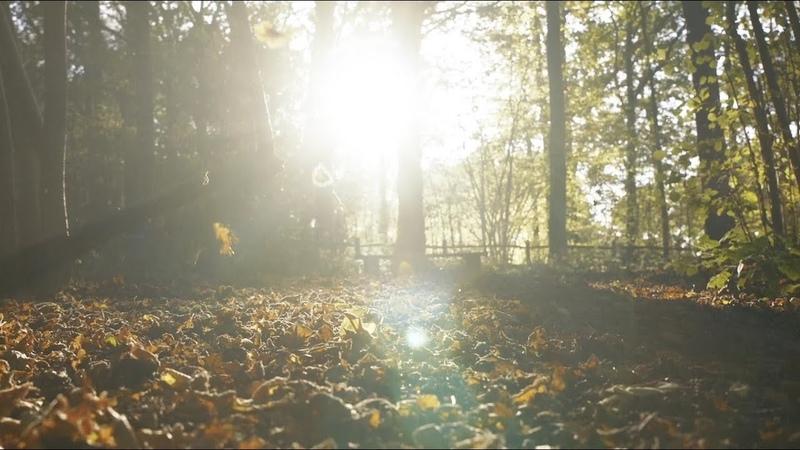 Eva Cassidy the London Symphony Orchestra - Autumn Leaves