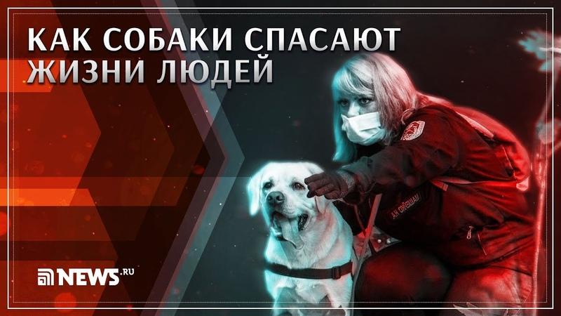 Как собаки спасают жизни людей