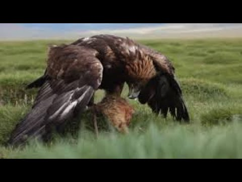 The Best Films Wild Balkans National Geographic HD