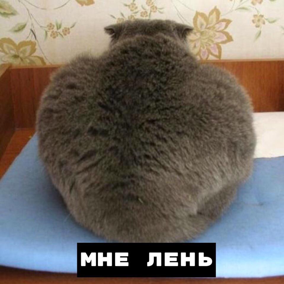 Текущее состояние:Котик.