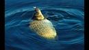 Рыбалка на Карася Карась на Поплавок Рыбалка на Лесном Озере