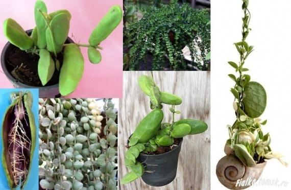 Оригинальные комнатные растения