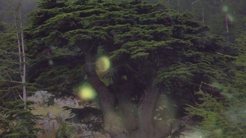 Источник Мощи И Сил Для Женщин Древнее Таинство Магическая МУЗЫКА Древо МИРА