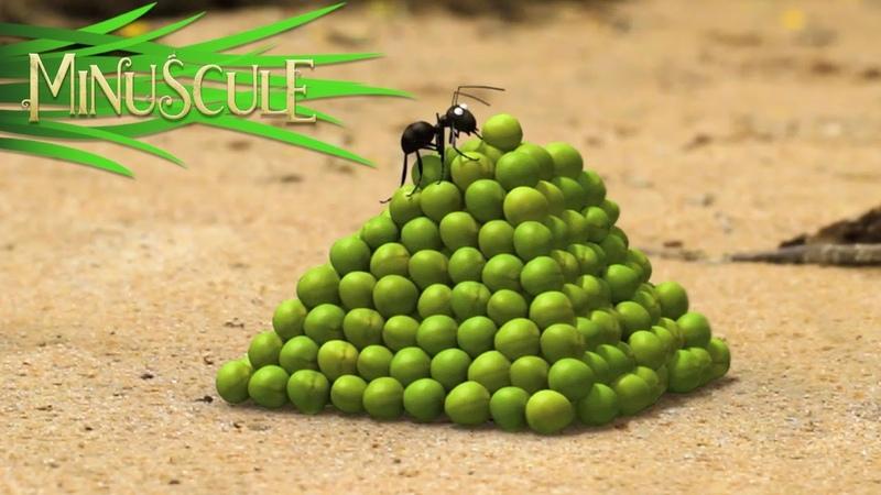 Minuscule A pea in the hand is worth Deux petits pois deux mesures Season 2