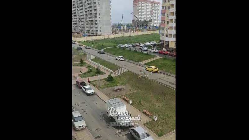 Стая собак в ЖК Платовский 15 5 2020 Ростов на Дону Главный