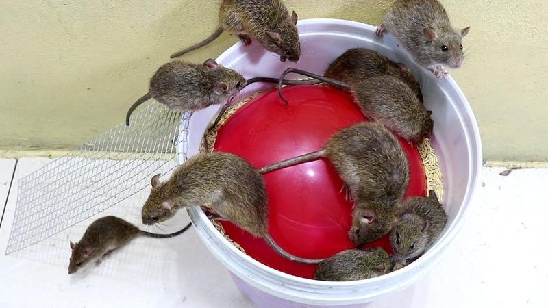 Cara membuat perangkap tikus mudah 🐀🐀 Perangkap tikus sederhana dengan balon dan botol air 2