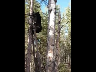 What could go wrong climbing up a human tree stand
