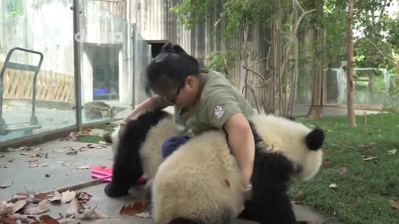 Работница зоопарка просто пытается делать свою работу