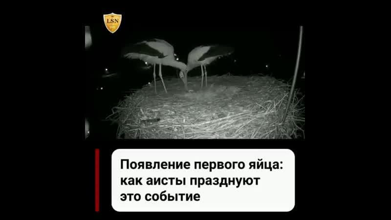Ya_rodilsya_blogCCymU5bKomn.mp4