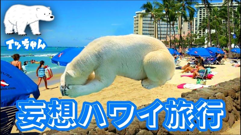 シロクマ 寒さに弱いイッちゃんが妄想するのはハワイ旅行なのでした・・・