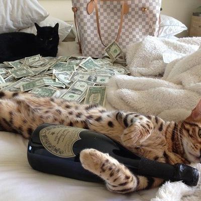 дам деньги под большие проценты