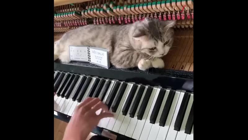 ну не дают кошке поспать