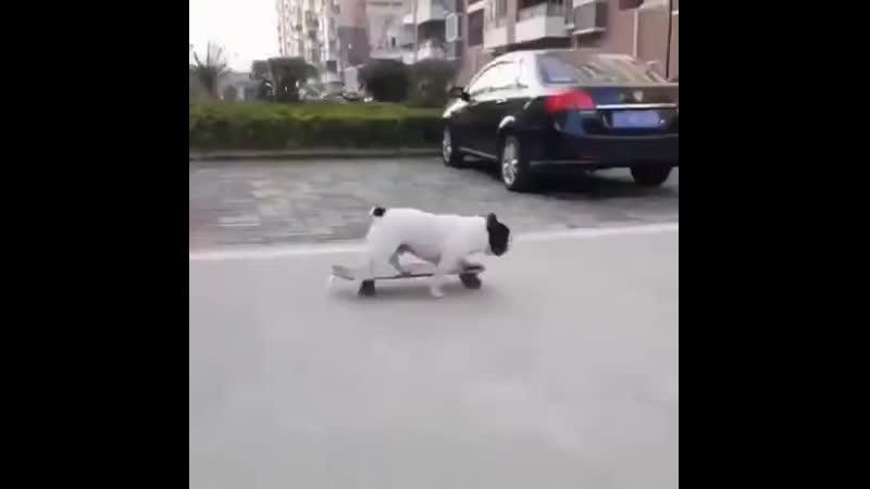 Пёсик