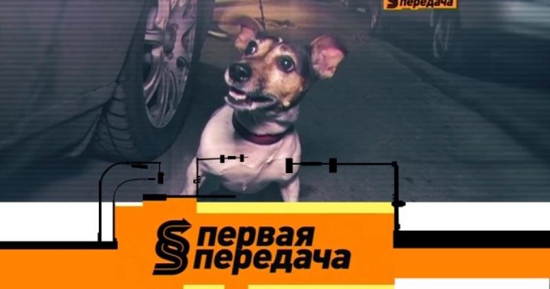 Дорожный конфликт из-за маленькой собаки и покупка бу автомобиля у официального дилера