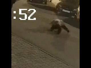 В Ярославле медведь напал на парня