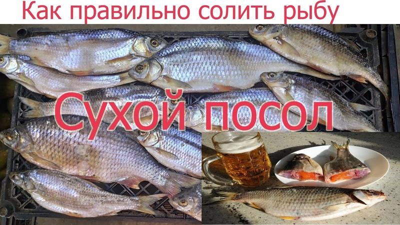 Как правильно и вкусно солить рыбу СУХИМ ПОСОЛОМ. Уникальный рецепт вяленой тарани по простому!