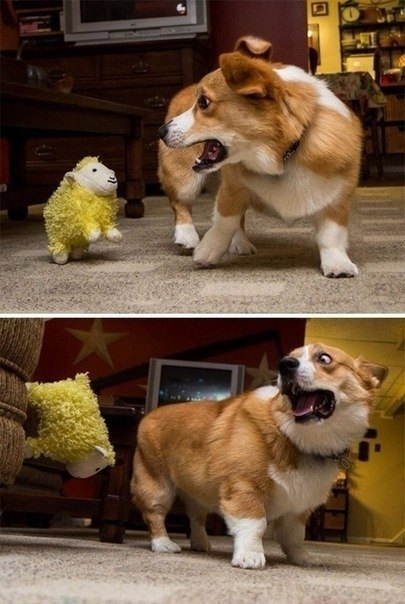 Ты под надёжной защитой, когда у тебя есть собака