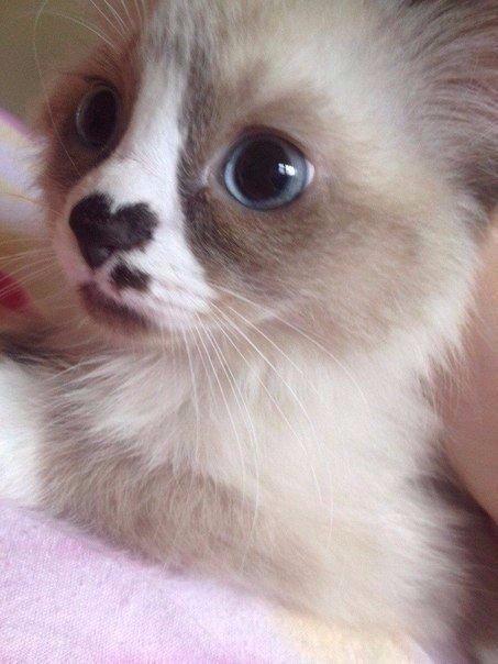 Помеченный котенок любви❤❤❤