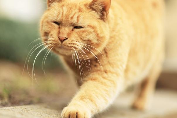 НЕЗВАНЫЙ ГОСТЬ Я вообще собачник по состоянию души, но он сам пришел. Кот, котяра, котище. По ширине лица понятно мыши его не интересуют как жанр. Как это существо могло оказаться на лестничной