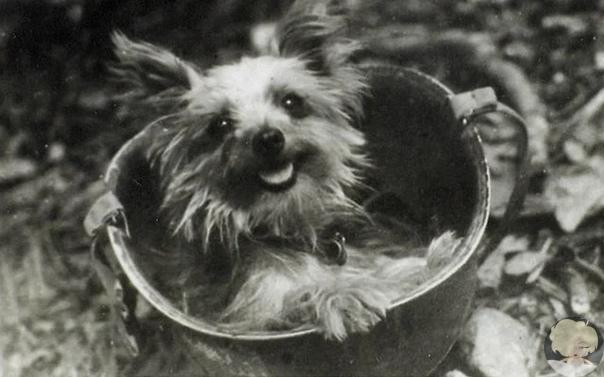 Собака Смоуки