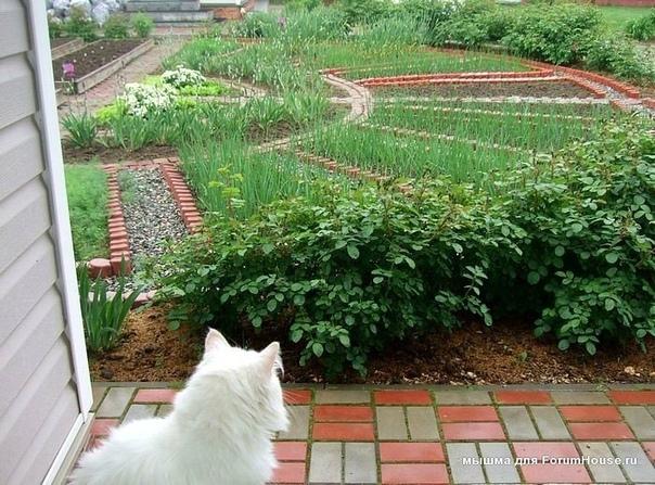 Мой любимый Домик в деревне - декоративный огород