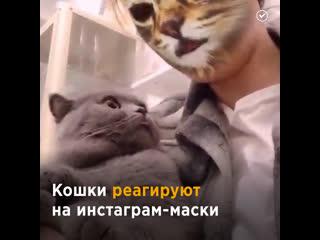 Реакция котов на кошачьи фильтры в соцсетях