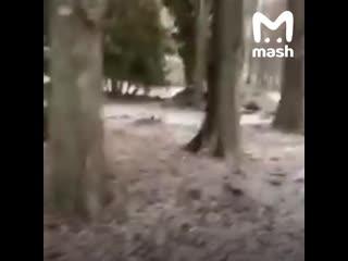 Мэр Липецка Евгения Уваркина отругала строителей парка матом в личном чате