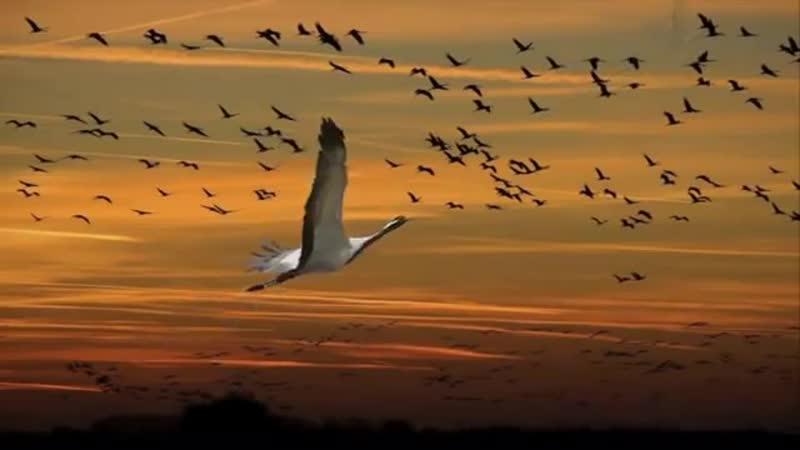 гр Кристина-крик улетевших птиц
