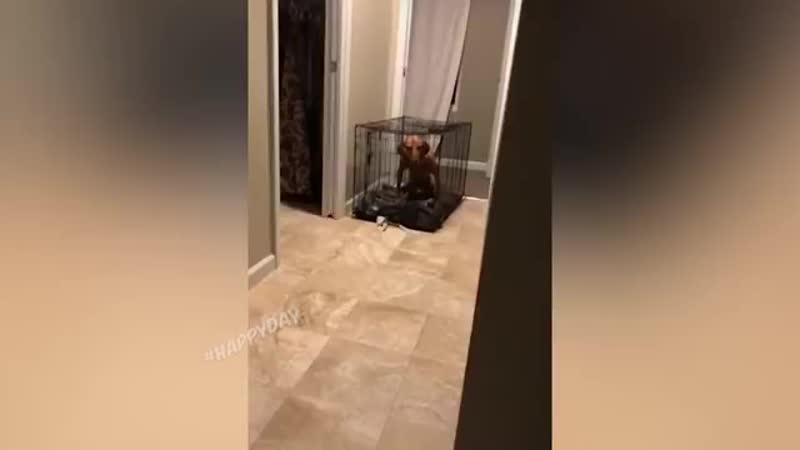 Смешные животные 😂😂😂