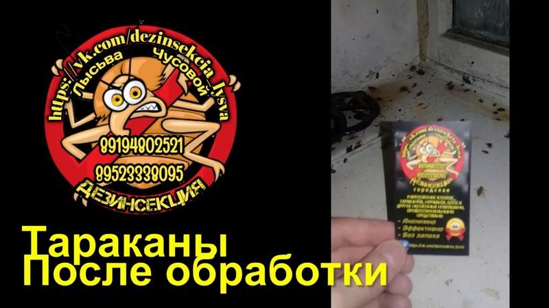 Дезинсекция Лысьва Чусовой Шок тараканы Наши работы До и После обработки квартиры