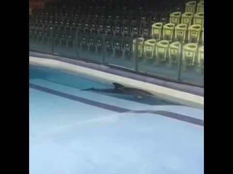 Так звучит одиночество Спаси дельфина и человека