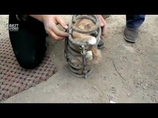 Спасение котейки - как он туда попал -