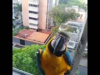 Sharing breakfast with the beautiful macaws! - Caracas Venezuela - - mariapichipichi _ IG -