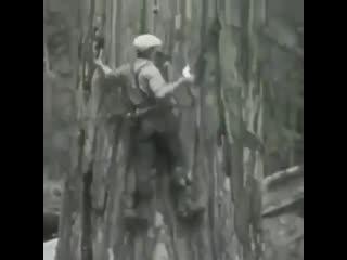 Как раньше отважно рубили деревья