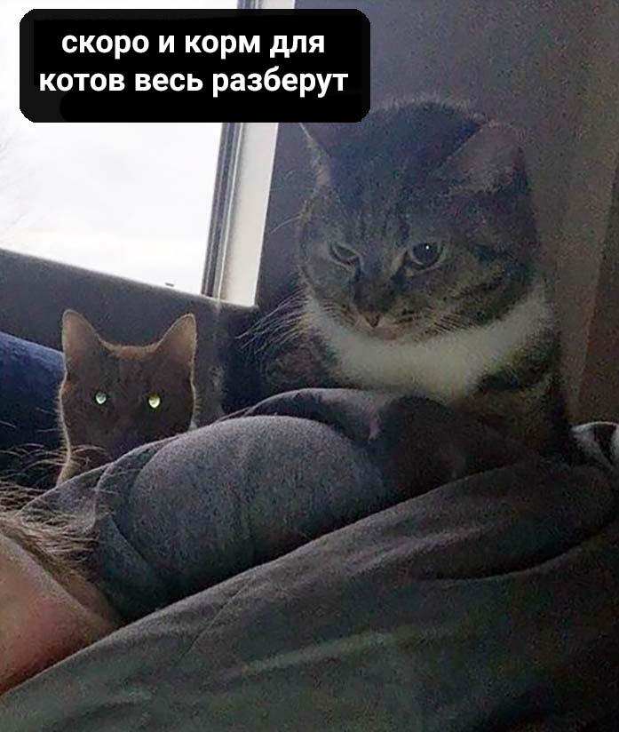 Когда твои коты поддались массовой панике