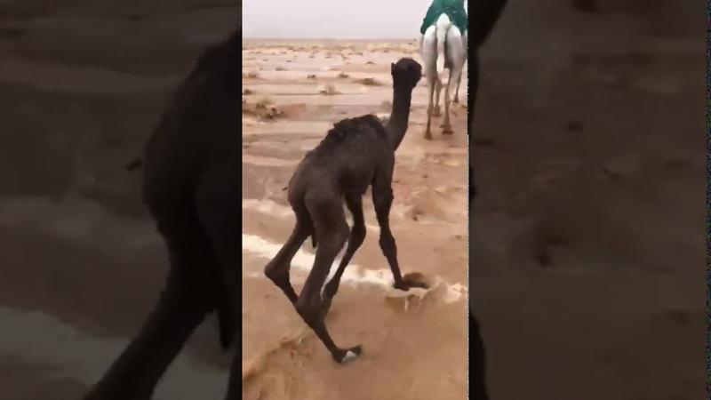 Severe hailstorm in Dawadmi الدوادمي Riyadh Province Saudi Arabia April 5 2020
