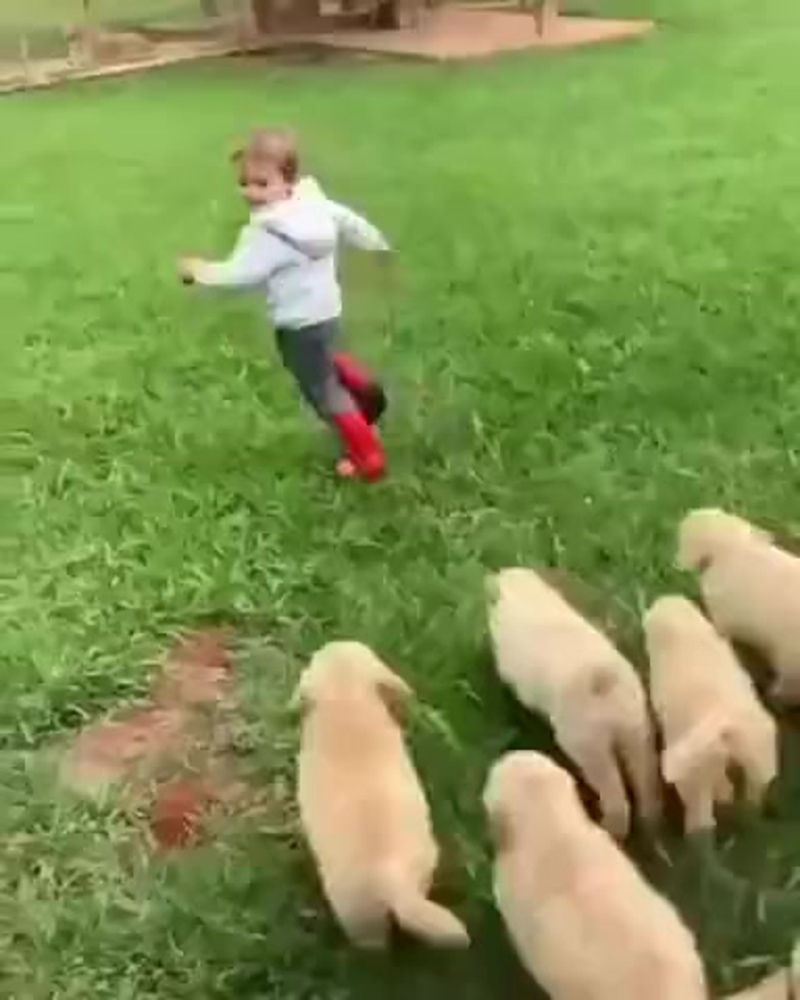 Стая собак напала на ребенка