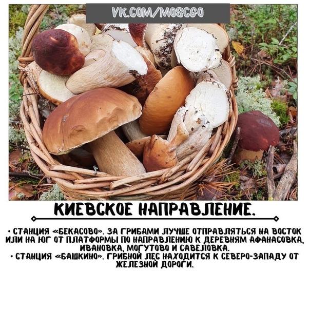 Куда отправиться в Подмосковье за грибами??...