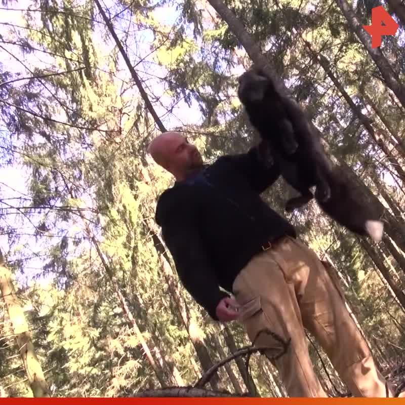 Тимофей Баженов поймал лису / #РЕНТВ