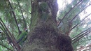 Фильм Новая Зеландия 3D Забытый рай 2013 смотреть онлайн бесплатно в хорошем 720 HD качестве