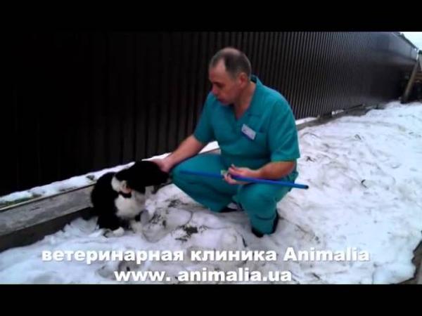 Как поймать собаку. Ветеринарная клиника Анималия