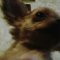 Личная фотография Юлика-Я-Риги-Стриру-Ю-Собаку Галстяна