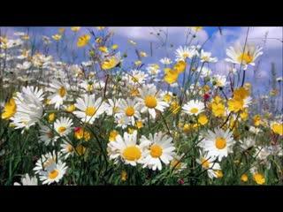 Полевые цветы для вас друзья! Прекрасного летнего настроения